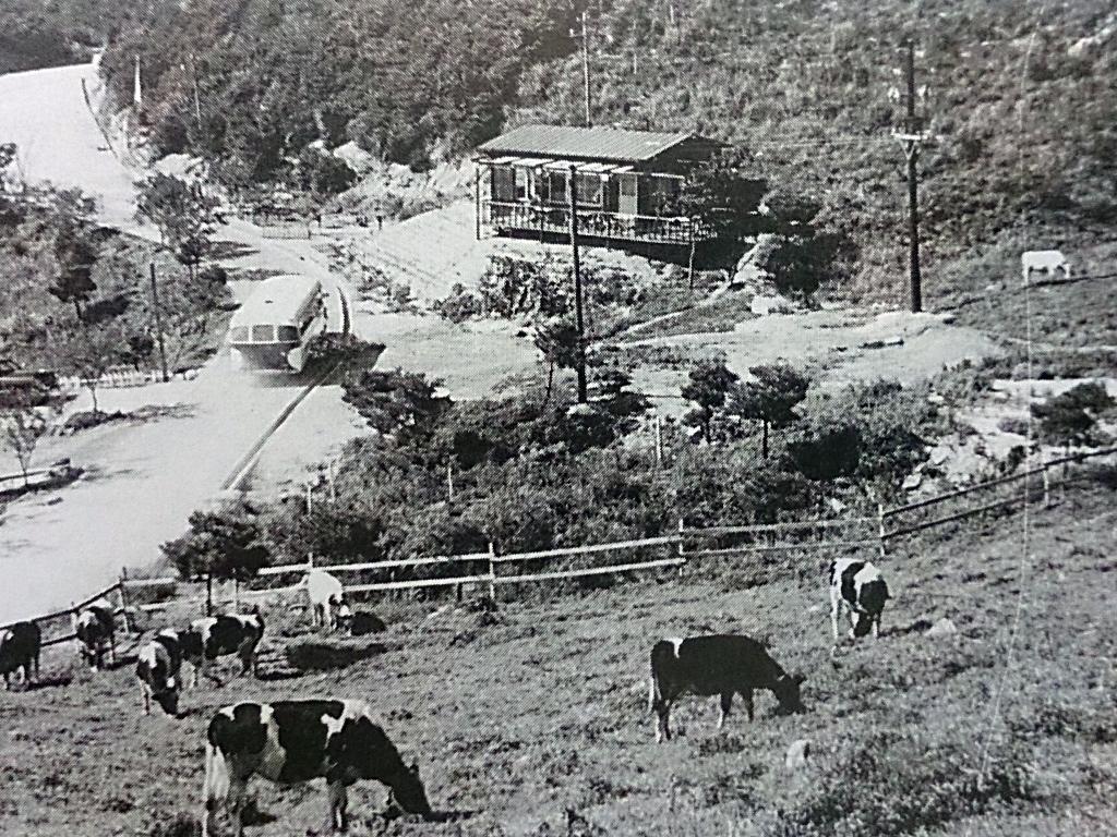 昭和26年開設ころの六甲山牧場。