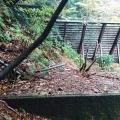 摩耶東谷深谷第4堰堤手前から支尾根へ。旧道跡かも知れない水平道を辿る。