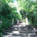 Tokiwaさんと半年ぶりの山行。摩耶山旧天上寺周辺の巨木とマザーツリーを巡る。