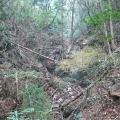 二週続けて摩耶東谷。旧参詣道の支流に入る。