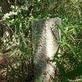 神戸市境界石No.59 獅子ヶ池東244.9mP付近にて。高取山を経て獅子ヶ山あるいはシシュー山(仮称)ピーク巡り。
